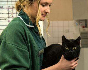 Vet nurse with black cat